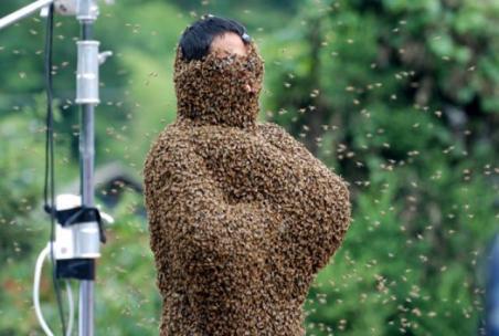 bee-bearding_5